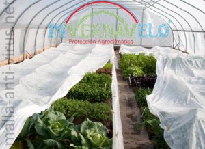 Cultivos protegidos en invernadero y con Malla anti-virus
